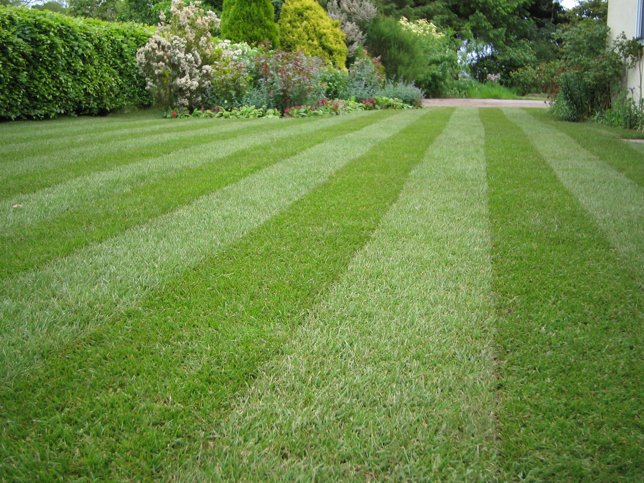 Lawn maintenance in lowndes county by lawncare valdosta for Best grass for landscaping